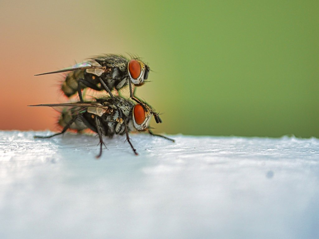 Bees-in-top-of-each-other.jpeg